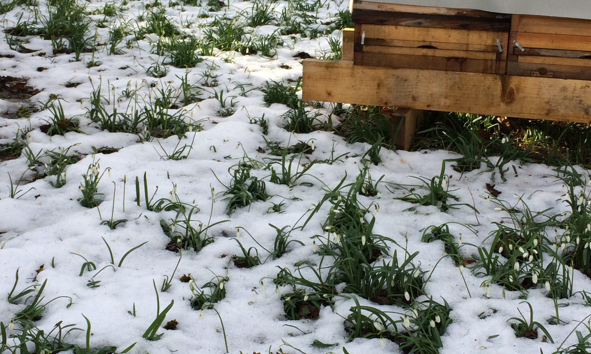 Unsere Bienen Befinden Sich Im Winterschlaf